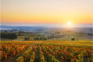 vignes Beaujolais